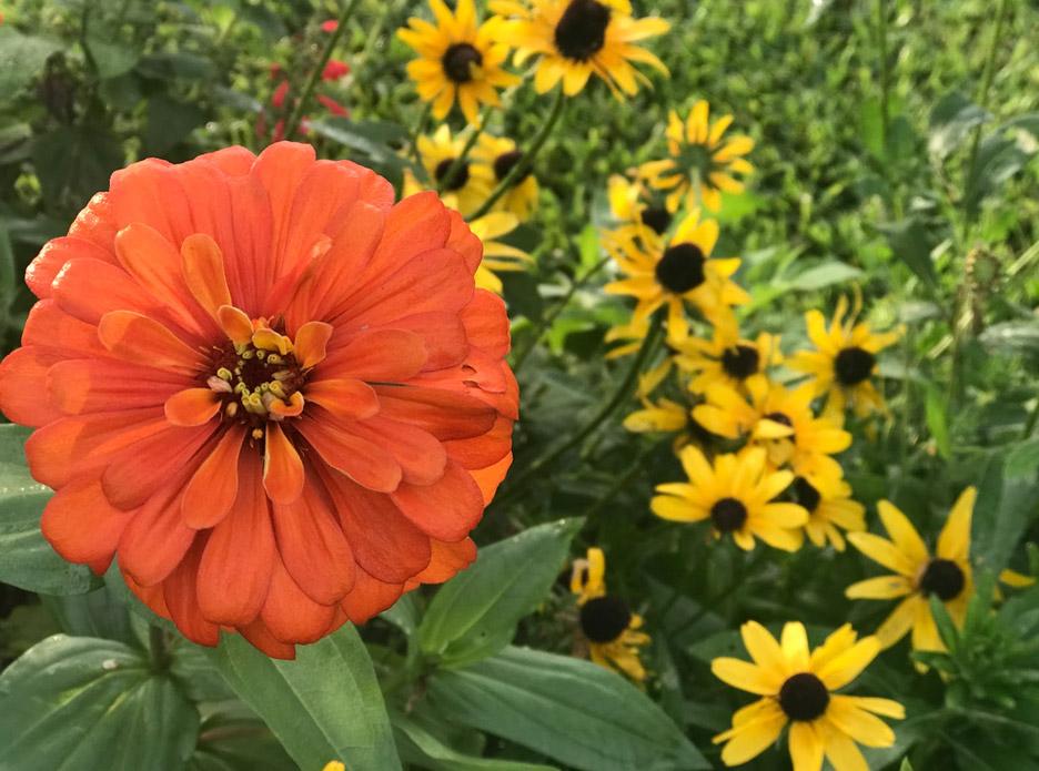marvel at effulgence of flower garden