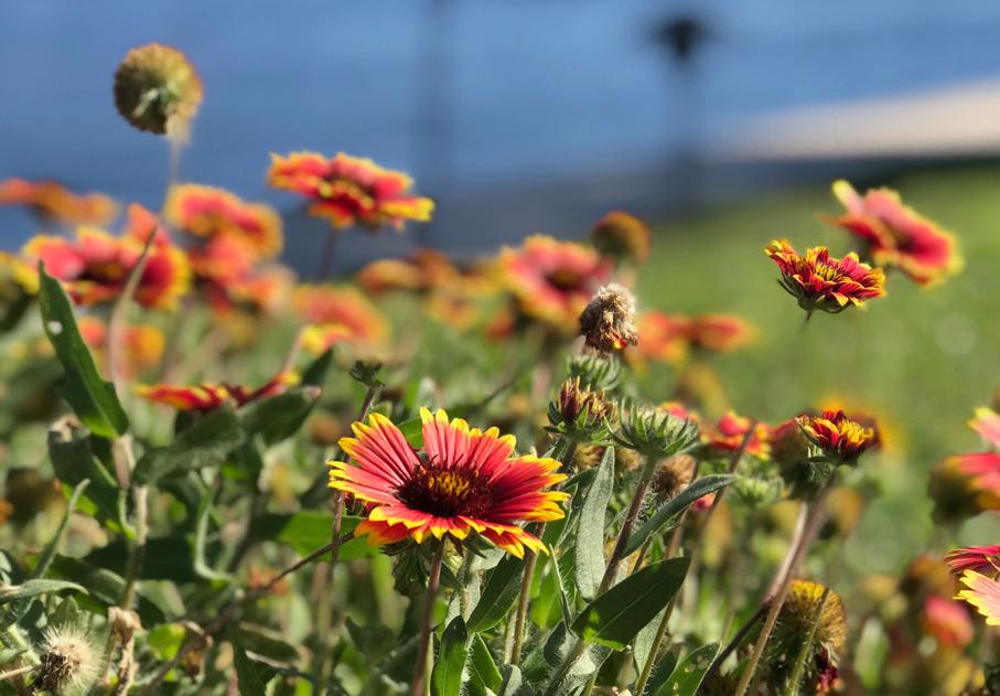 wildflower poems that celebrate nature jet widick